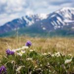 Югорчане показали всю духовную красоту мира в фотографии